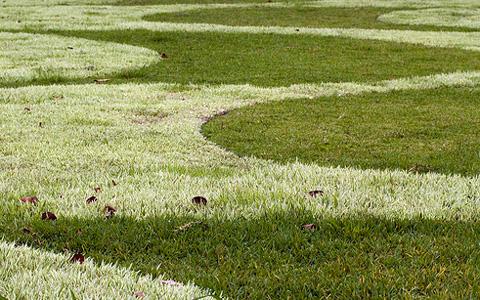 rbm_grass